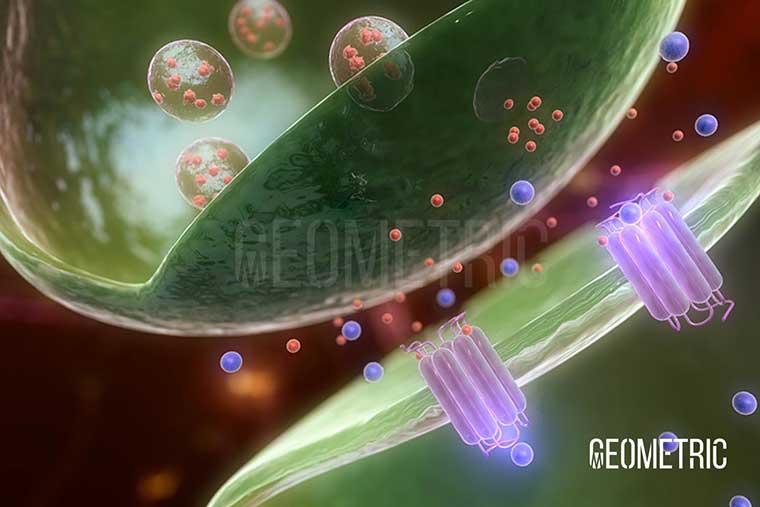 Huntington's Disease Animation