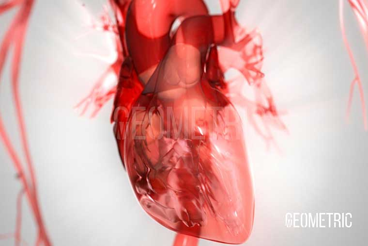View Cardiovascular Case Study