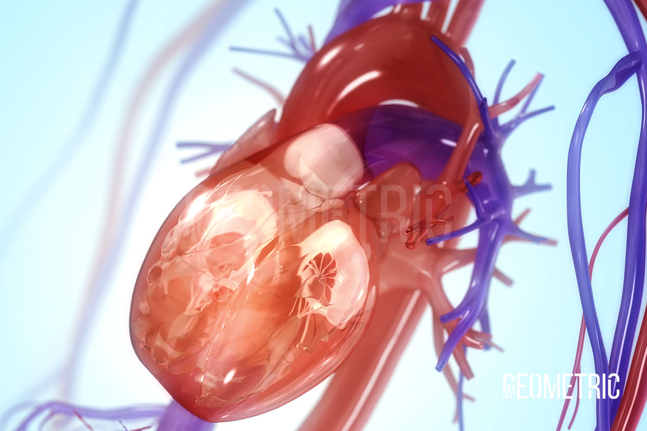 Circulatory System, Illustrated by Geometric Medical Animation