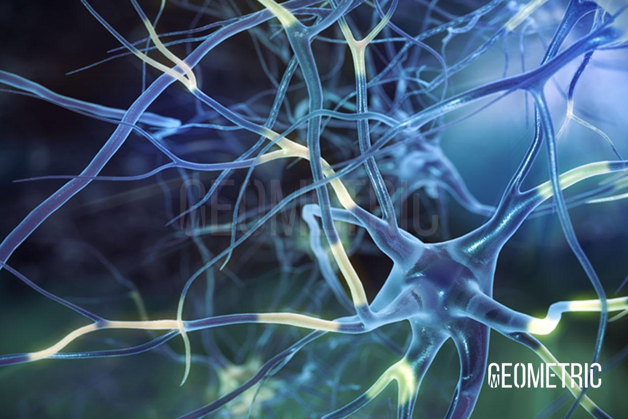 Neurons 3D Illustration
