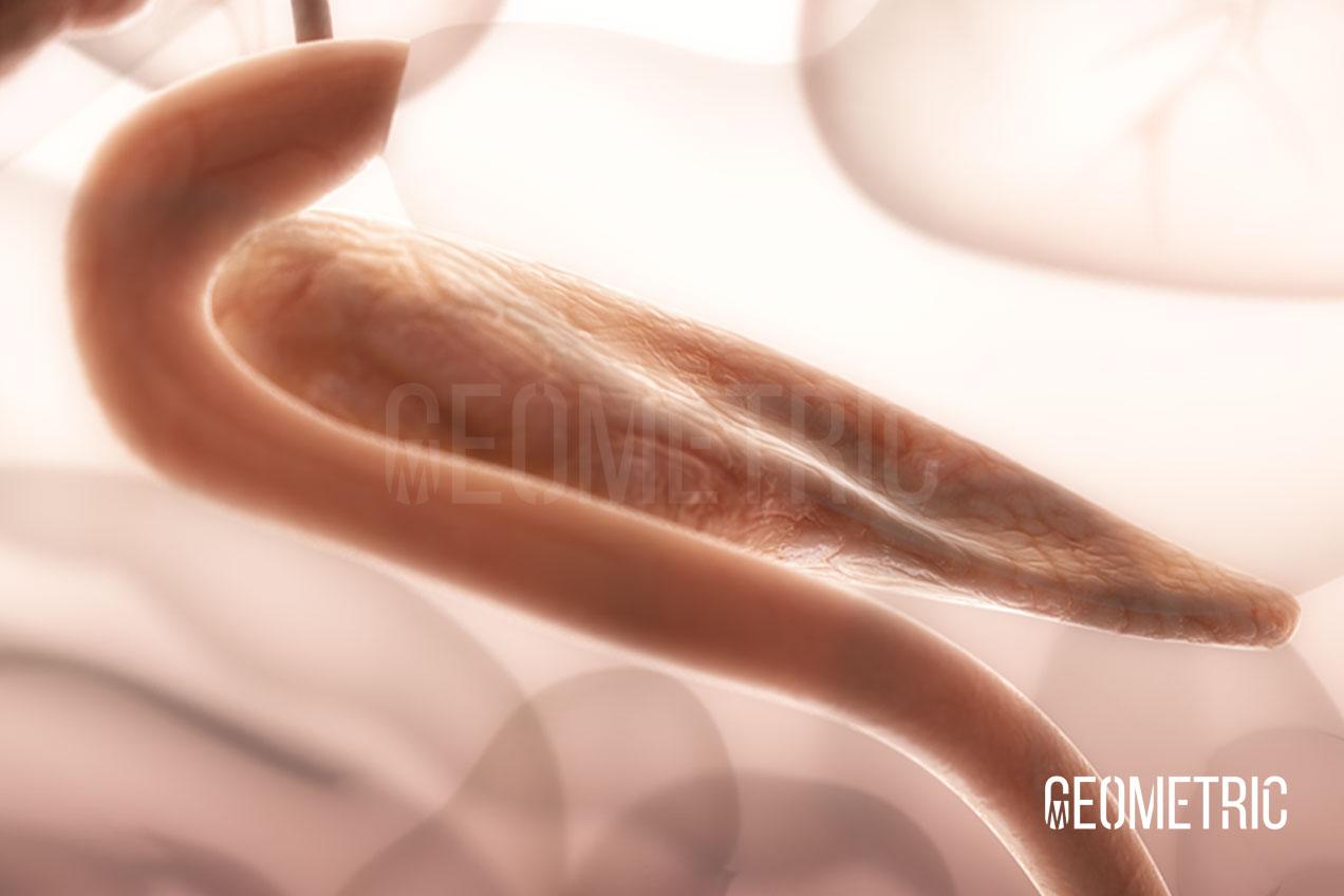 Pancreatic Illustration