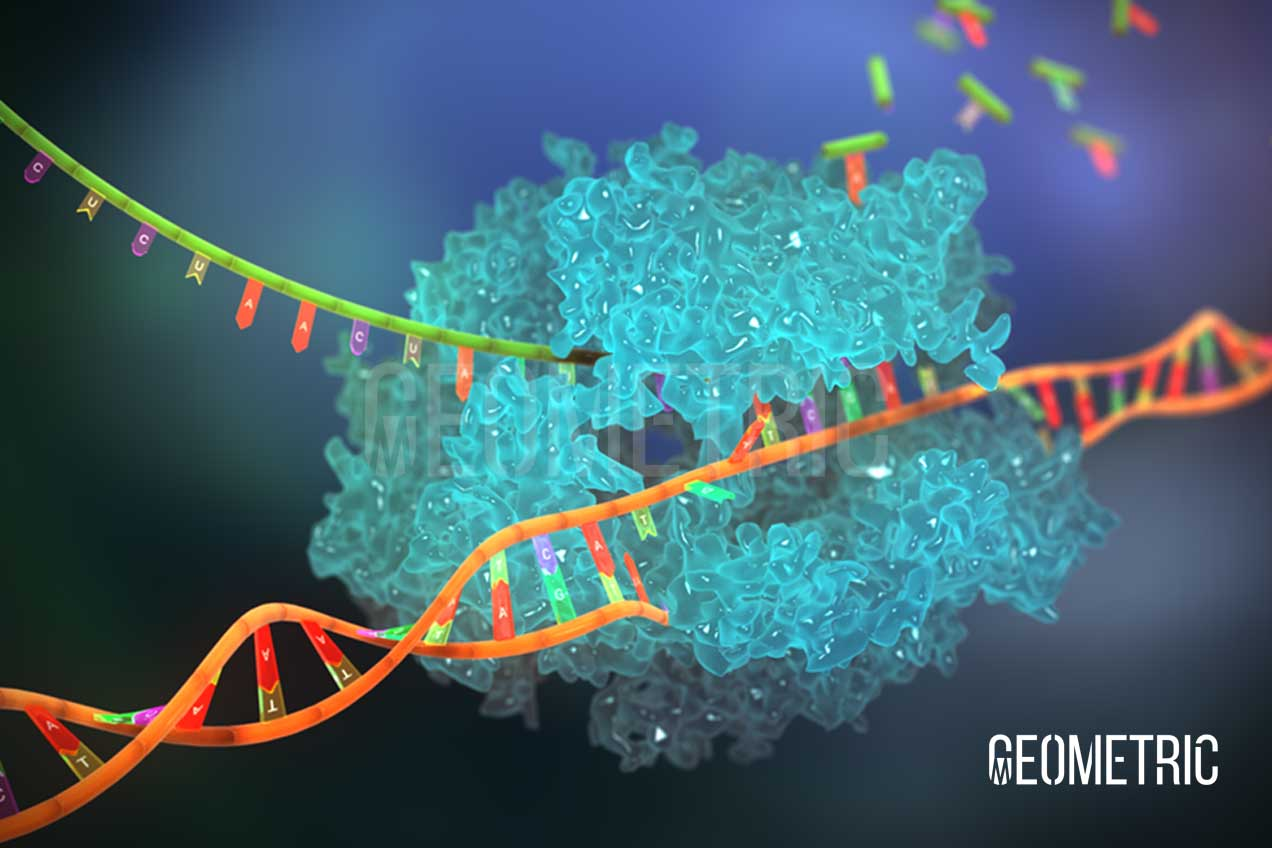 DNA polymerase illustration