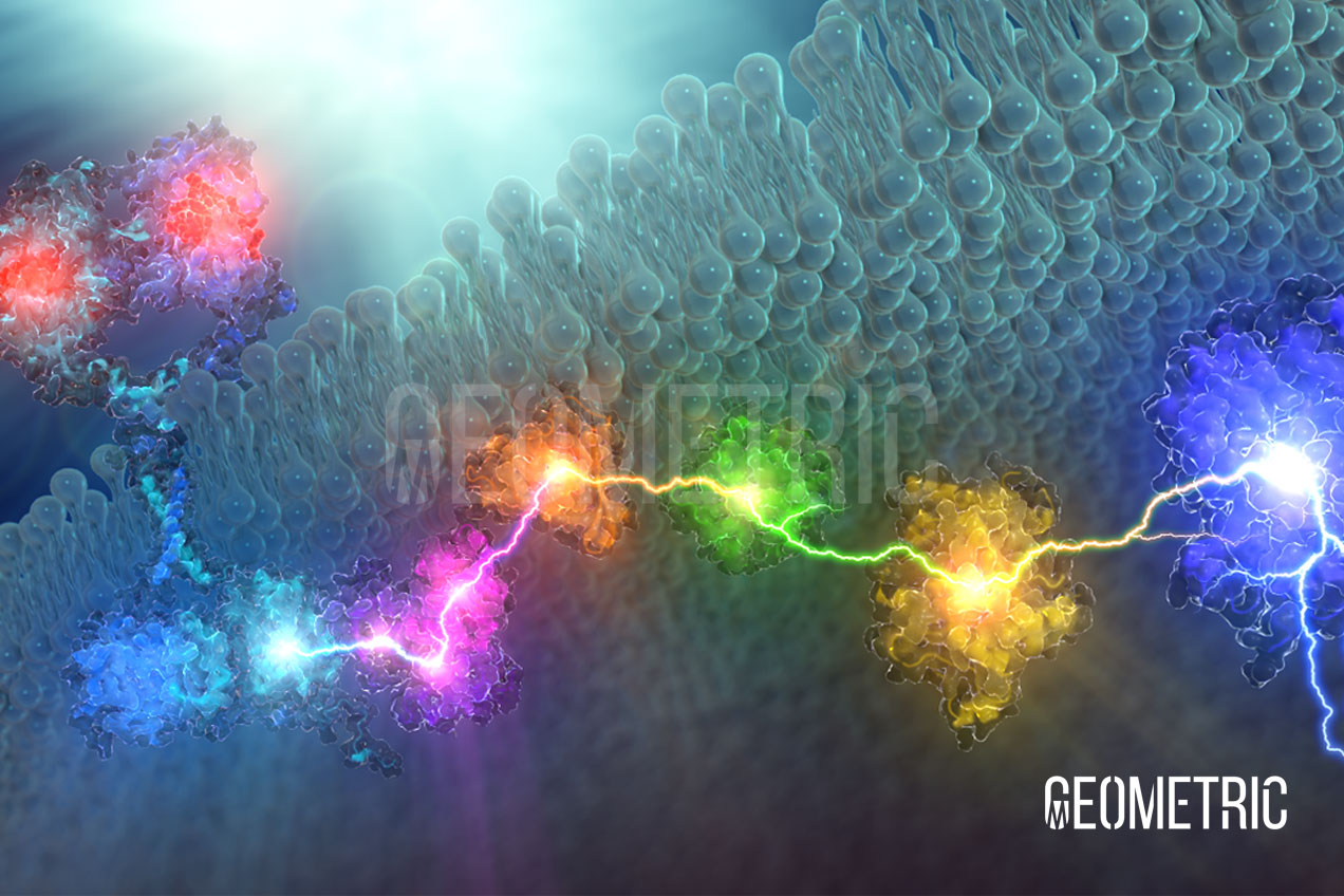 Signal Transduction Illustration